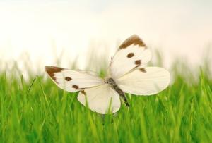 sit-butterfly